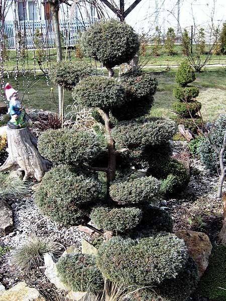 Tvarování v japonských zahradách